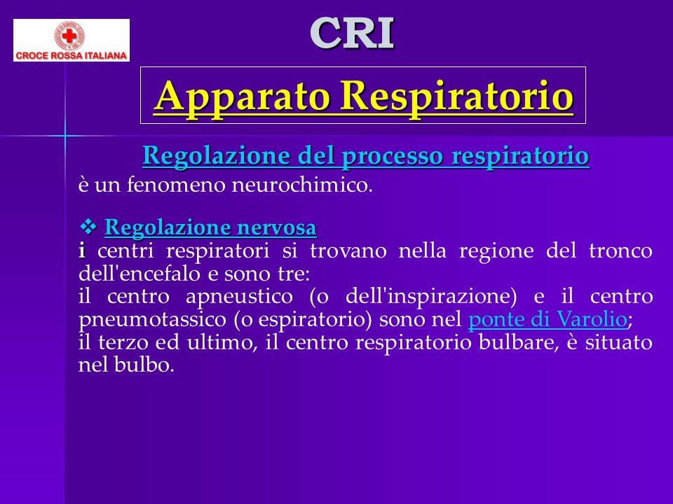 CRI Apparato Respiratorio Regolazione del processo respiratorio è un fenomeno neurochimico. Regolazione nervosa Regolazione nervosa i i centri respira