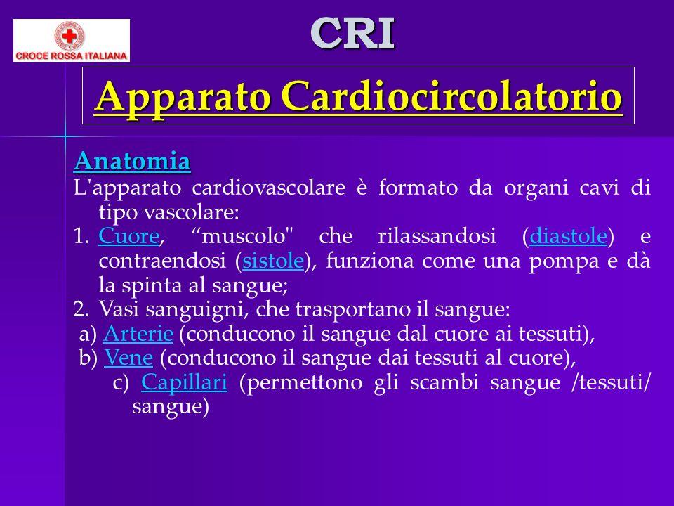 CRI Apparato Cardiocircolatorio Anatomia L'apparato cardiovascolare è formato da organi cavi di tipo vascolare: 1.Cuore, muscolo