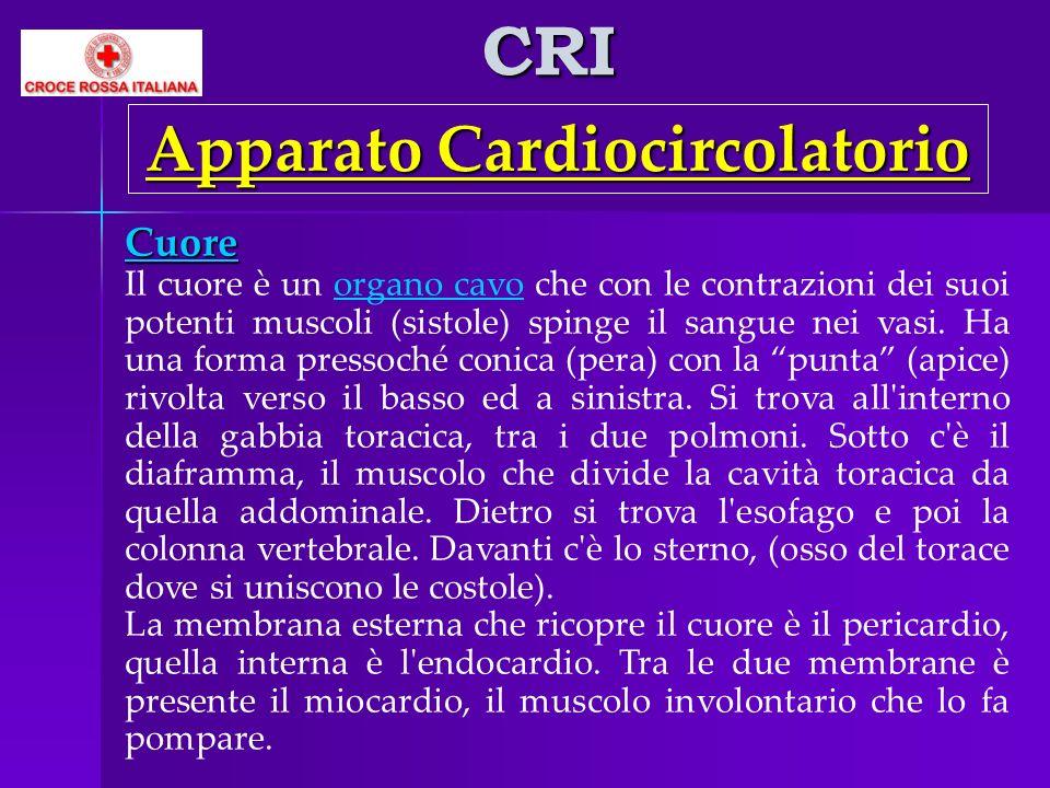 CRI Cuore Il cuore è un organo cavo che con le contrazioni dei suoi potenti muscoli (sistole) spinge il sangue nei vasi. Ha una forma pressoché conica