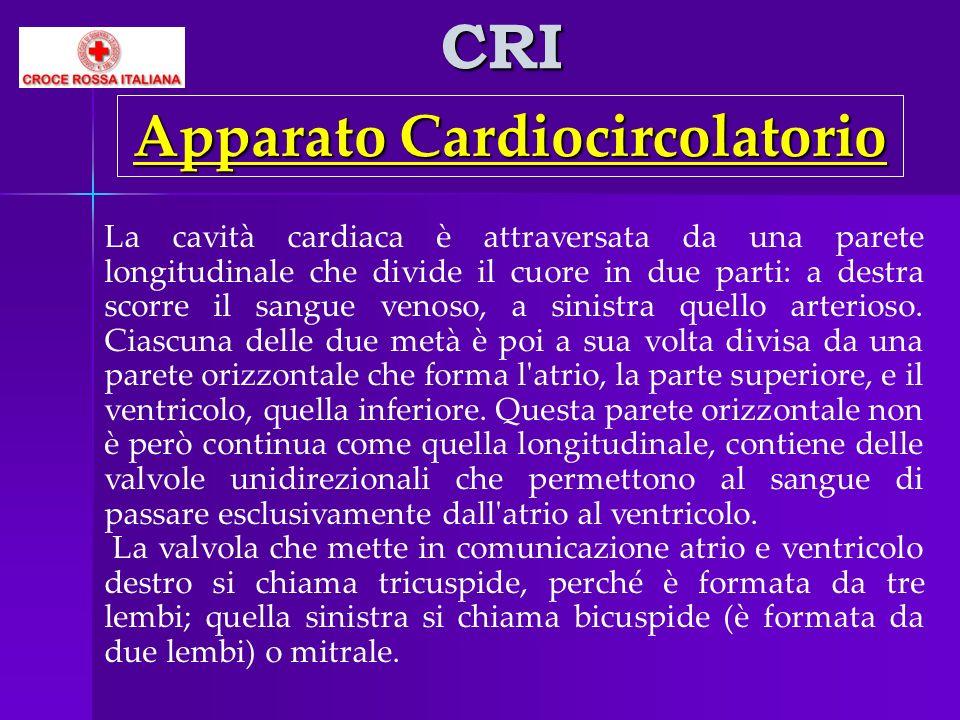 CRI La cavità cardiaca è attraversata da una parete longitudinale che divide il cuore in due parti: a destra scorre il sangue venoso, a sinistra quell