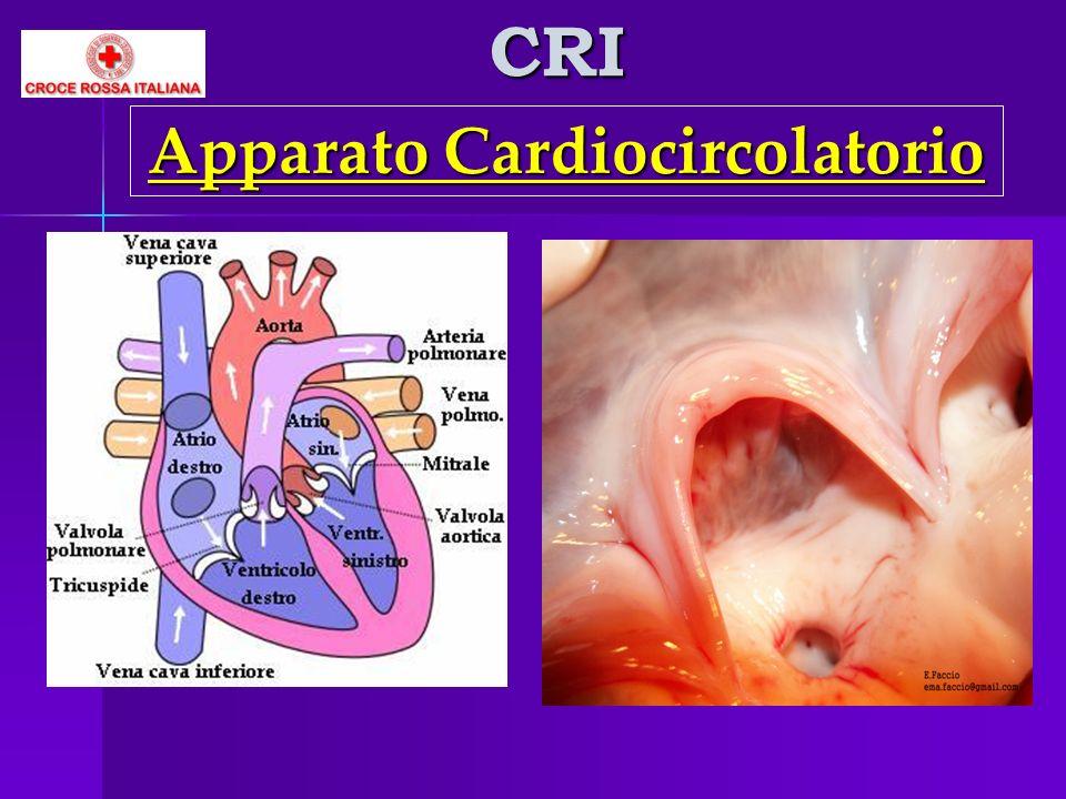 CRI Apparato Cardiocircolatorio