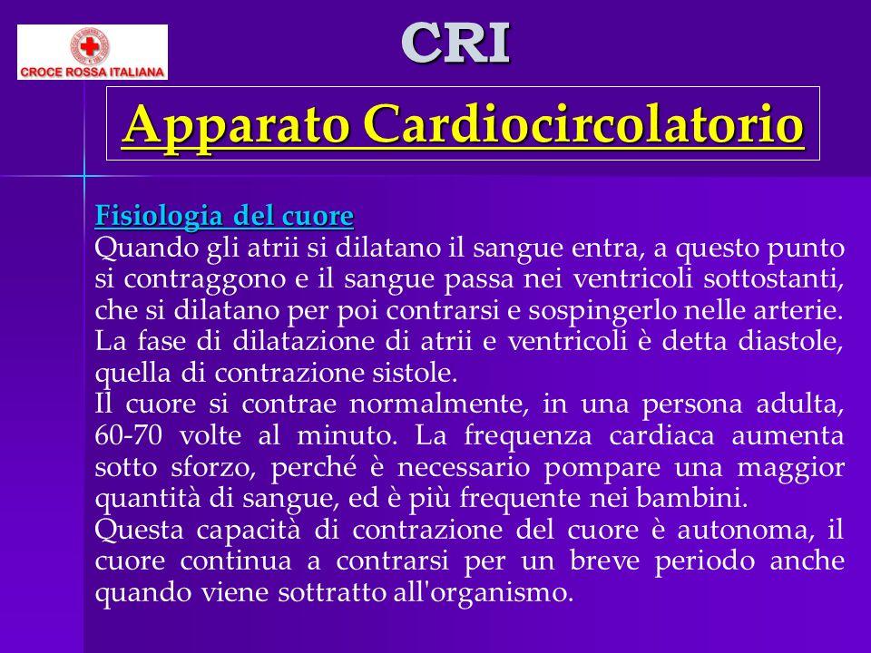 CRI Fisiologia del cuore Quando gli atrii si dilatano il sangue entra, a questo punto si contraggono e il sangue passa nei ventricoli sottostanti, che