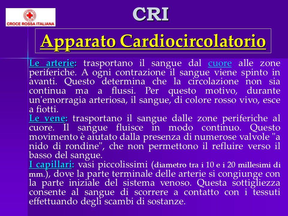 CRI Apparato Cardiocircolatorio Le arterie: Le arterie: trasportano il sangue dal cuore alle zone periferiche. A ogni contrazione il sangue viene spin