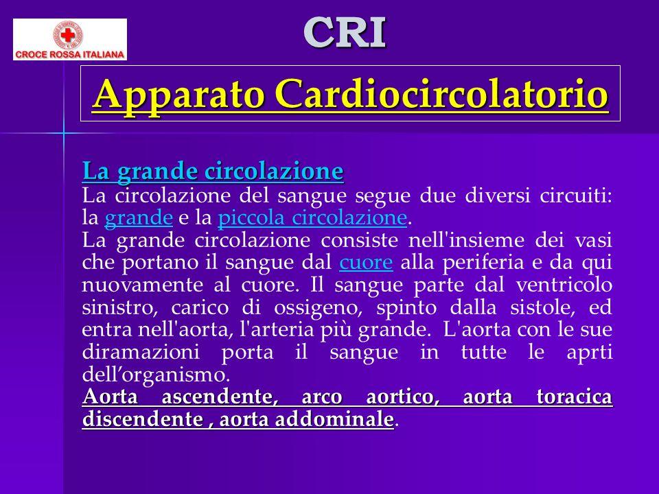 CRI Apparato Cardiocircolatorio La grande circolazione La circolazione del sangue segue due diversi circuiti: la grande e la piccola circolazione.picc