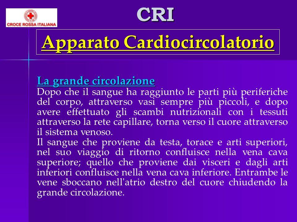 CRI Apparato Cardiocircolatorio La grande circolazione Dopo che il sangue ha raggiunto le parti più periferiche del corpo, attraverso vasi sempre più