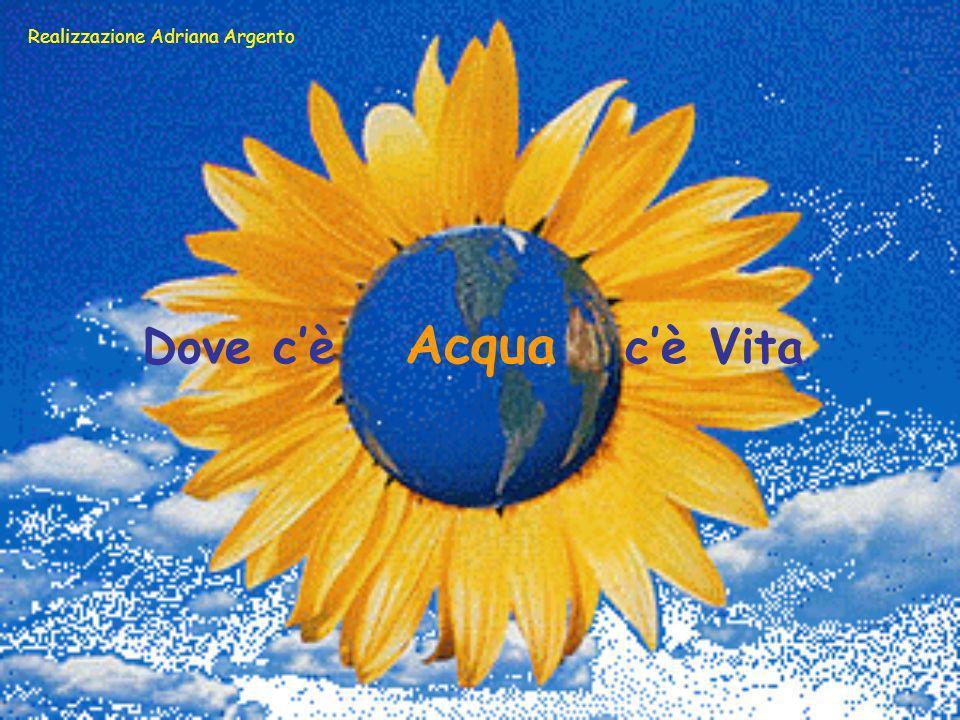 Dove cè Acqua cè Vita Realizzazione Adriana Argento