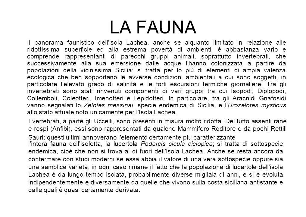 LA FAUNA Il panorama faunistico dell'isola Lachea, anche se alquanto limitato in relazione alle ridottissima superficie ed alla estrema povertà di amb