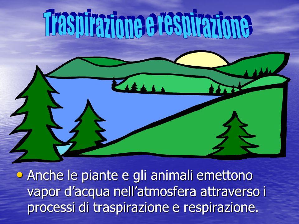 Anche le piante e gli animali emettono vapor dacqua nellatmosfera attraverso i processi di traspirazione e respirazione. Anche le piante e gli animali