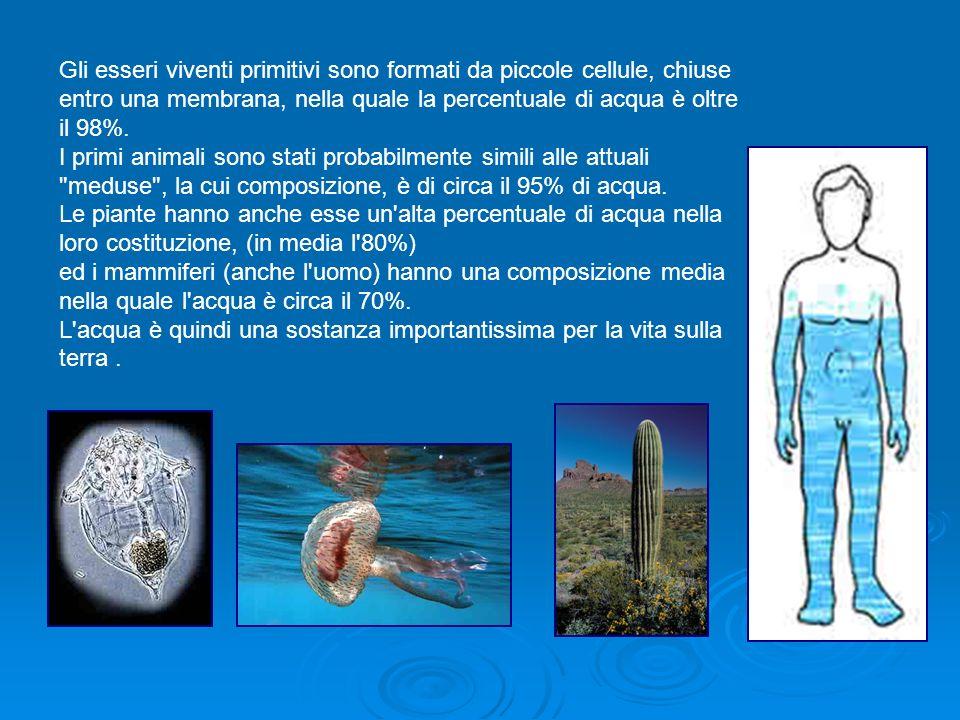 Gli esseri viventi primitivi sono formati da piccole cellule, chiuse entro una membrana, nella quale la percentuale di acqua è oltre il 98%. I primi a