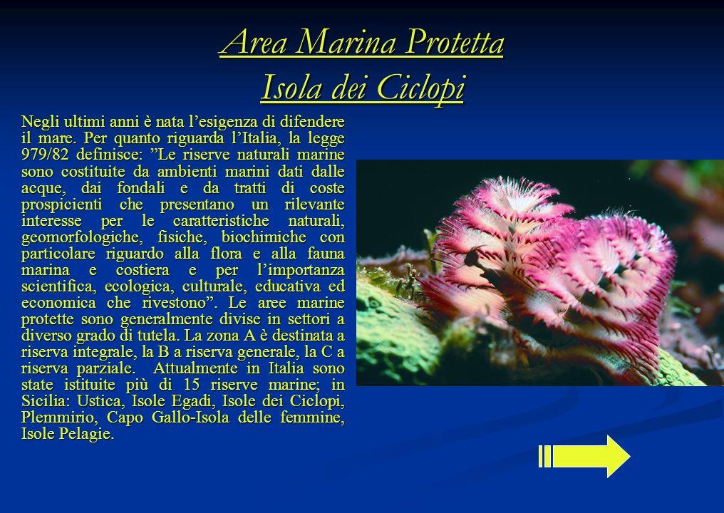 Area Marina Protetta Isola dei Ciclopi Negli ultimi anni è nata lesigenza di difendere il mare. Per quanto riguarda lItalia, la legge 979/82 definisce