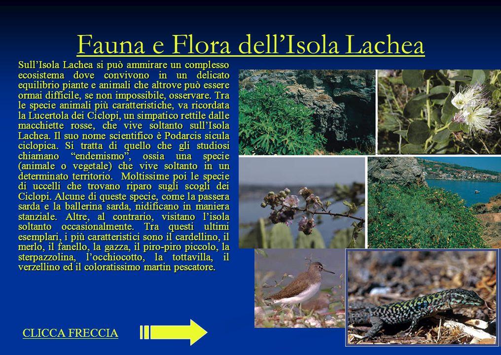 Fauna e Flora dellIsola Lachea SullIsola Lachea si può ammirare un complesso ecosistema dove convivono in un delicato equilibrio piante e animali che
