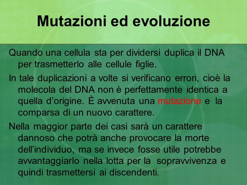 Mutazioni ed evoluzione Quando una cellula sta per dividersi duplica il DNA per trasmetterlo alle cellule figlie. In tale duplicazioni a volte si veri