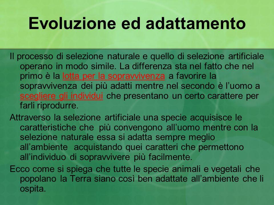 Evoluzione ed adattamento Il processo di selezione naturale e quello di selezione artificiale operano in modo simile. La differenza sta nel fatto che