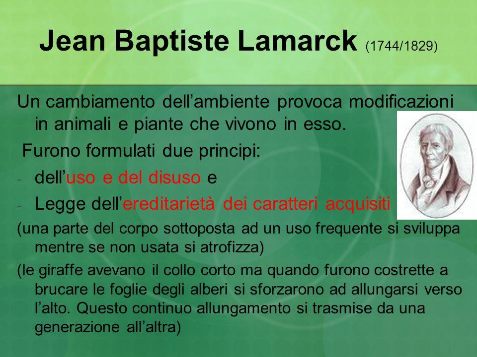 Jean Baptiste Lamarck (1744/1829) Un cambiamento dellambiente provoca modificazioni in animali e piante che vivono in esso. Furono formulati due princ