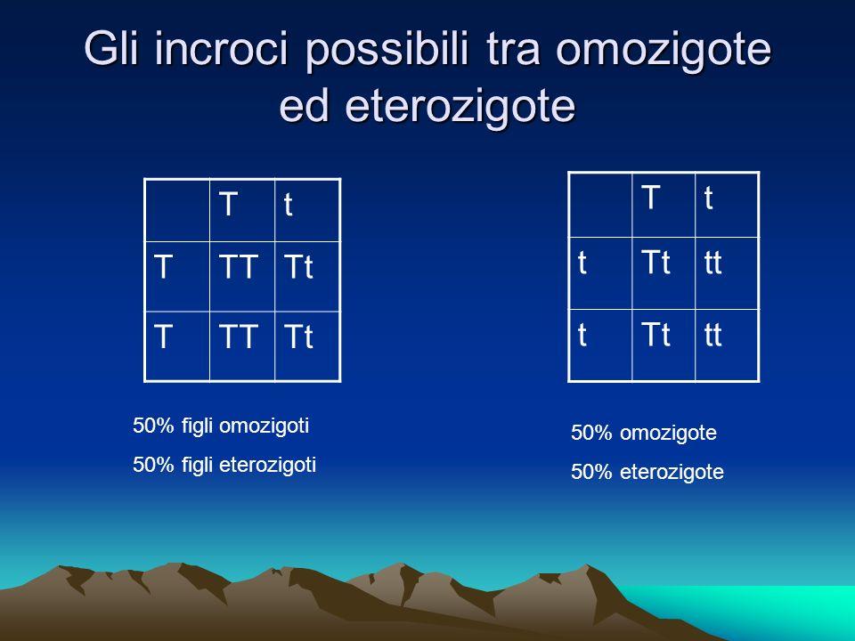 Gli incroci possibili tra omozigote ed eterozigote Tt TTTTt TTTTt Tt t tt tTttt 50% figli omozigoti 50% figli eterozigoti 50% omozigote 50% eterozigot