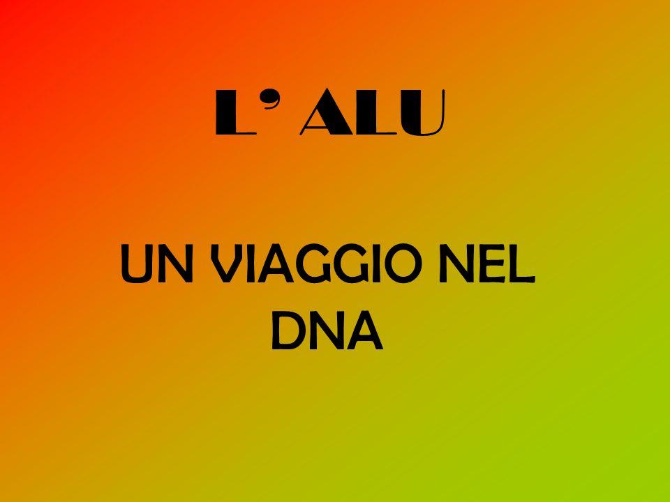 L ALU UN VIAGGIO NEL DNA