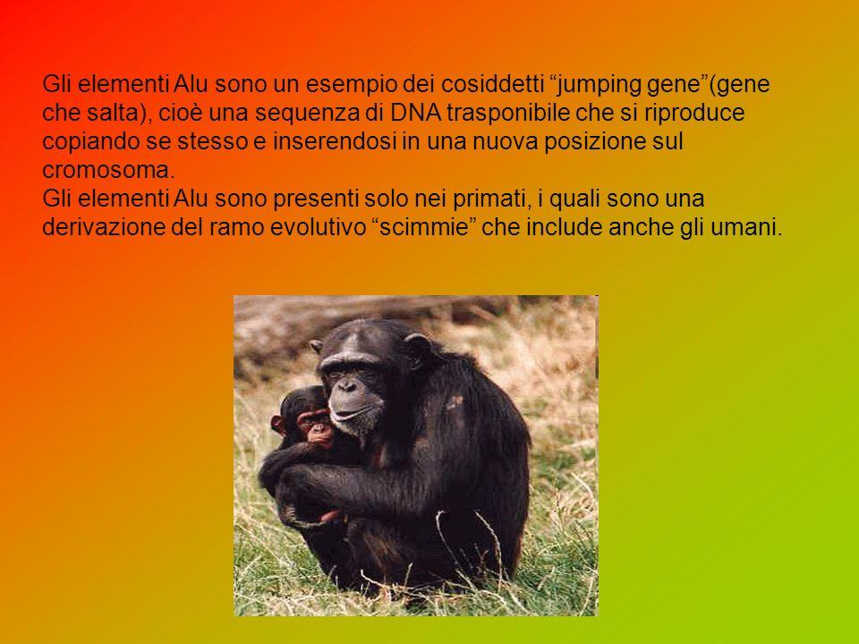Gli elementi Alu sono un esempio dei cosiddetti jumping gene(gene che salta), cioè una sequenza di DNA trasponibile che si riproduce copiando se stesso e inserendosi in una nuova posizione sul cromosoma.