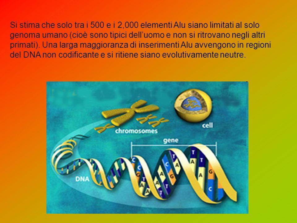 Si stima che solo tra i 500 e i 2,000 elementi Alu siano limitati al solo genoma umano (cioè sono tipici delluomo e non si ritrovano negli altri primati).