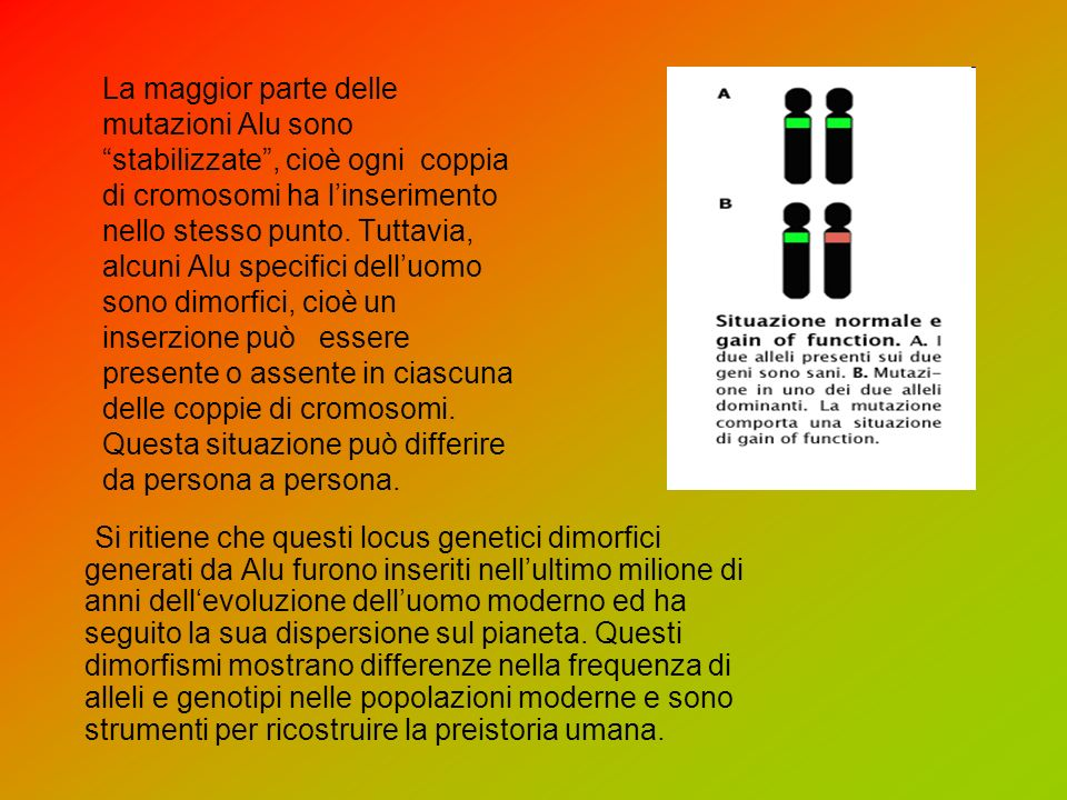 La maggior parte delle mutazioni Alu sono stabilizzate, cioè ogni coppia di cromosomi ha linserimento nello stesso punto.