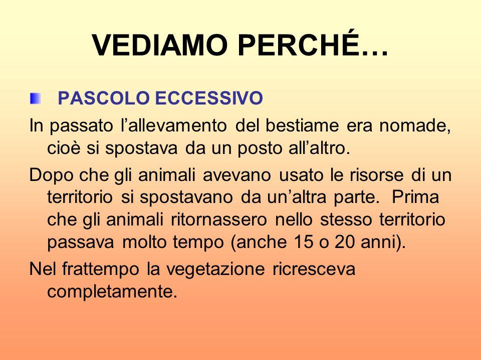 VEDIAMO PERCHÉ… PASCOLO ECCESSIVO In passato lallevamento del bestiame era nomade, cioè si spostava da un posto allaltro. Dopo che gli animali avevano