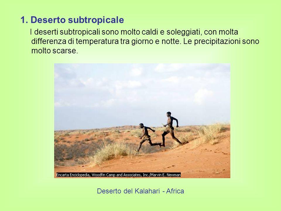 1. Deserto subtropicale I deserti subtropicali sono molto caldi e soleggiati, con molta differenza di temperatura tra giorno e notte. Le precipitazion