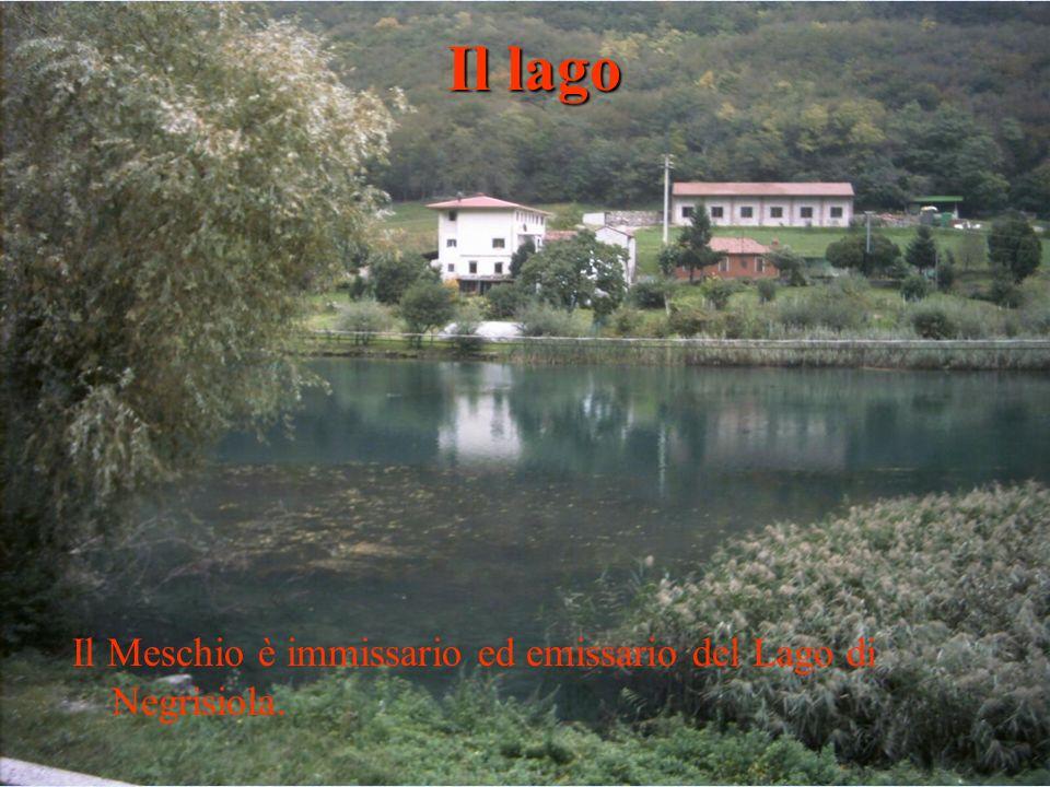 Il Meschio è immissario ed emissario del Lago di Negrisiola. Il lago