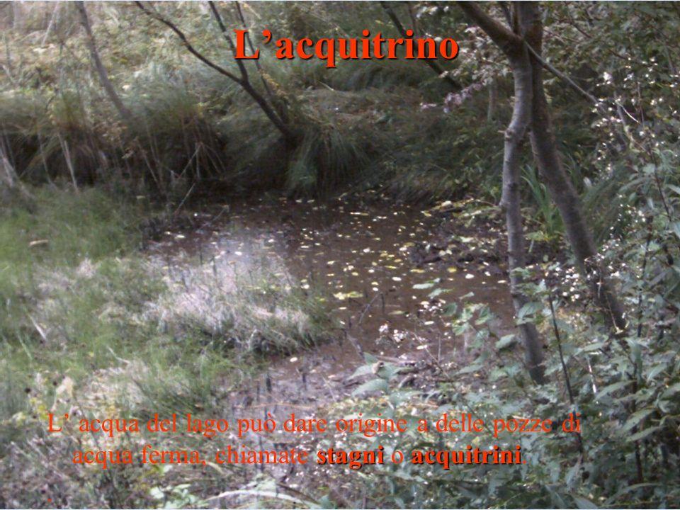 stagniacquitrini L acqua del lago può dare origine a delle pozze di acqua ferma, chiamate stagni o acquitrini..Lacquitrino