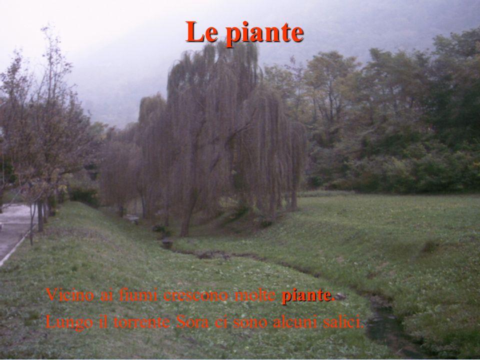 piante Vicino ai fiumi crescono molte piante. Lungo il torrente Sora ci sono alcuni salici. Le piante
