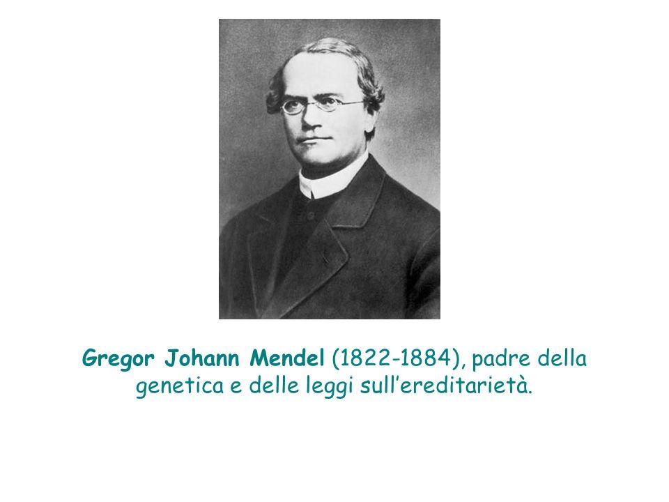 Gregor Johann Mendel (1822-1884), padre della genetica e delle leggi sullereditarietà.