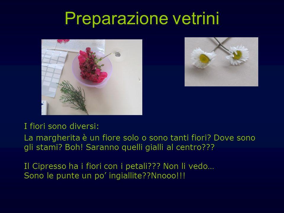 Preparazione vetrini I fiori sono diversi: La margherita è un fiore solo o sono tanti fiori? Dove sono gli stami? Boh! Saranno quelli gialli al centro