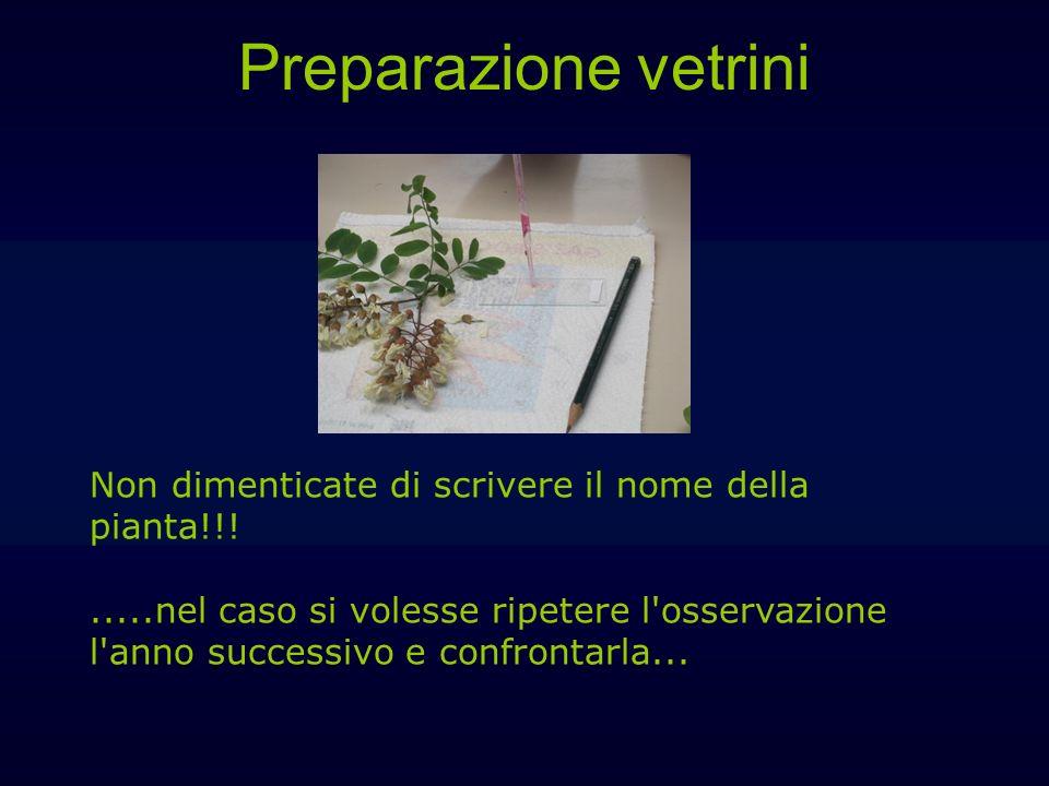 Preparazione vetrini Non dimenticate di scrivere il nome della pianta!!!.....nel caso si volesse ripetere l'osservazione l'anno successivo e confronta
