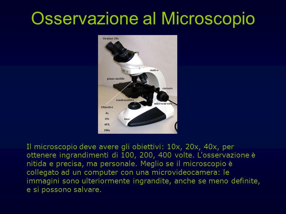 Osservazione al Microscopio Il microscopio deve avere gli obiettivi: 10x, 20x, 40x, per ottenere ingrandimenti di 100, 200, 400 volte. L'osservazione