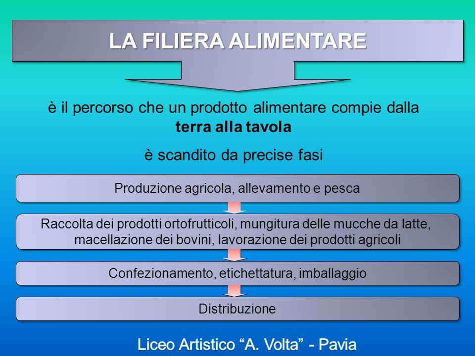LA FILIERA ALIMENTARE è il percorso che un prodotto alimentare compie dalla terra alla tavola è scandito da precise fasi Produzione agricola, allevame