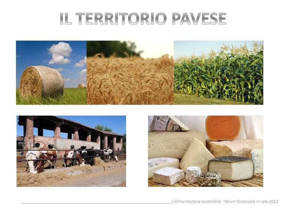 __________________________________________________________________Lalimentazione sostenibile - Forum Ecoscuole in rete 2013 Secondo lIFAD - International Fund for Agricoltural Development-, quasi l11% della superficie verde della terra è stata degradata dalle attività umane nei passati 45 anni.