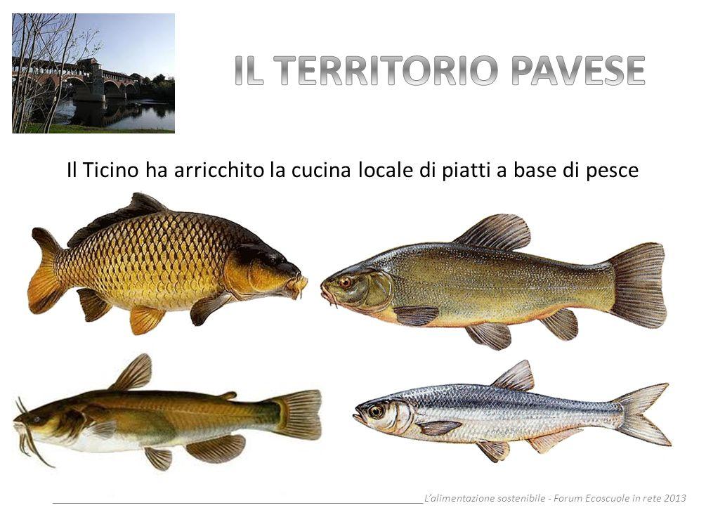 Il Ticino ha arricchito la cucina locale di piatti a base di pesce