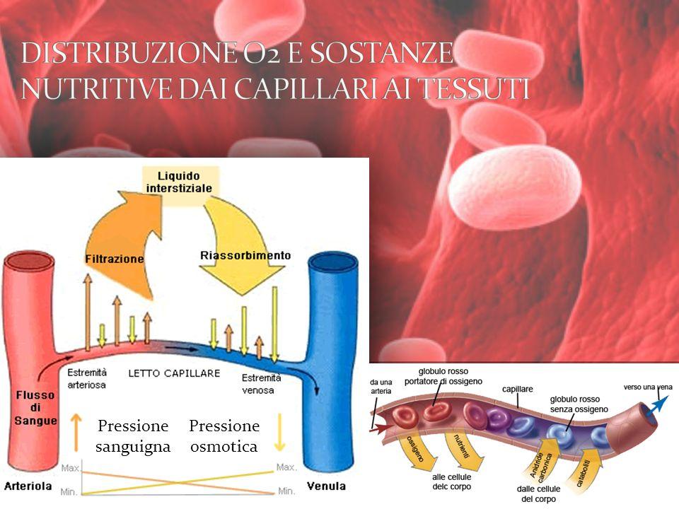 Pressione osmotica Pressione sanguigna