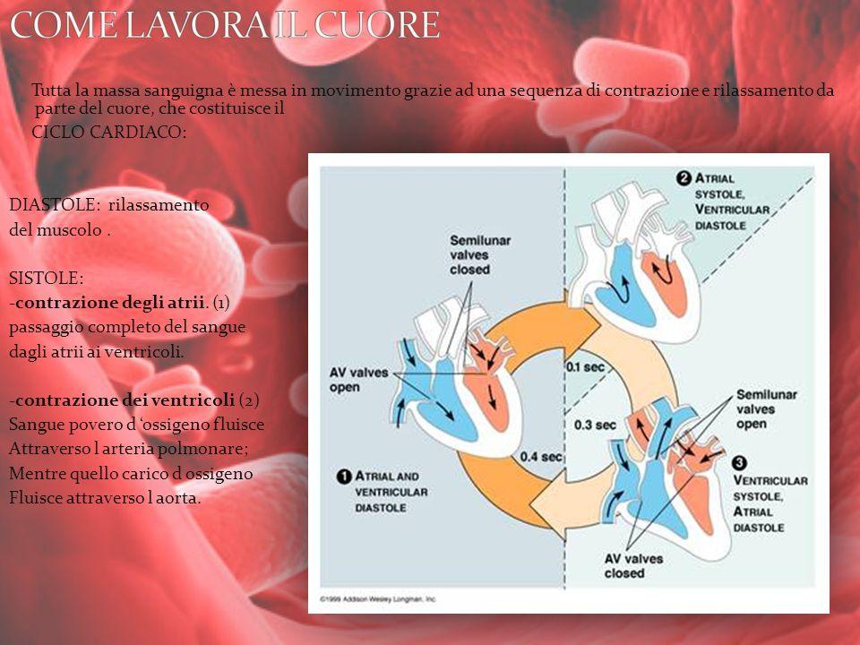 Tutta la massa sanguigna è messa in movimento grazie ad una sequenza di contrazione e rilassamento da parte del cuore, che costituisce il CICLO CARDIA