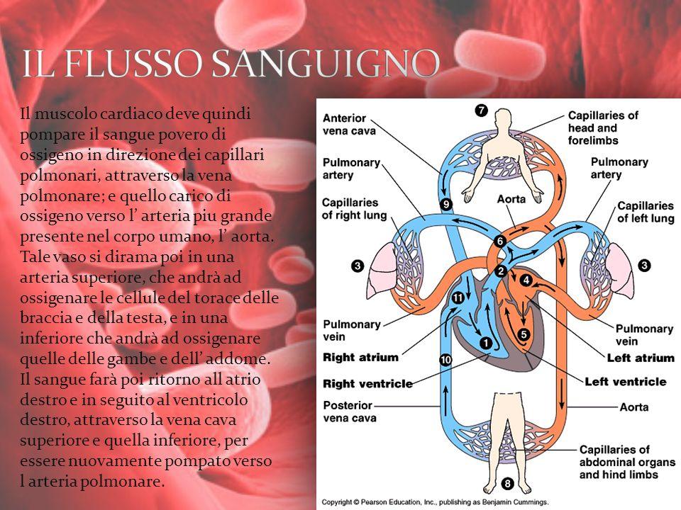 Il muscolo cardiaco deve quindi pompare il sangue povero di ossigeno in direzione dei capillari polmonari, attraverso la vena polmonare; e quello cari