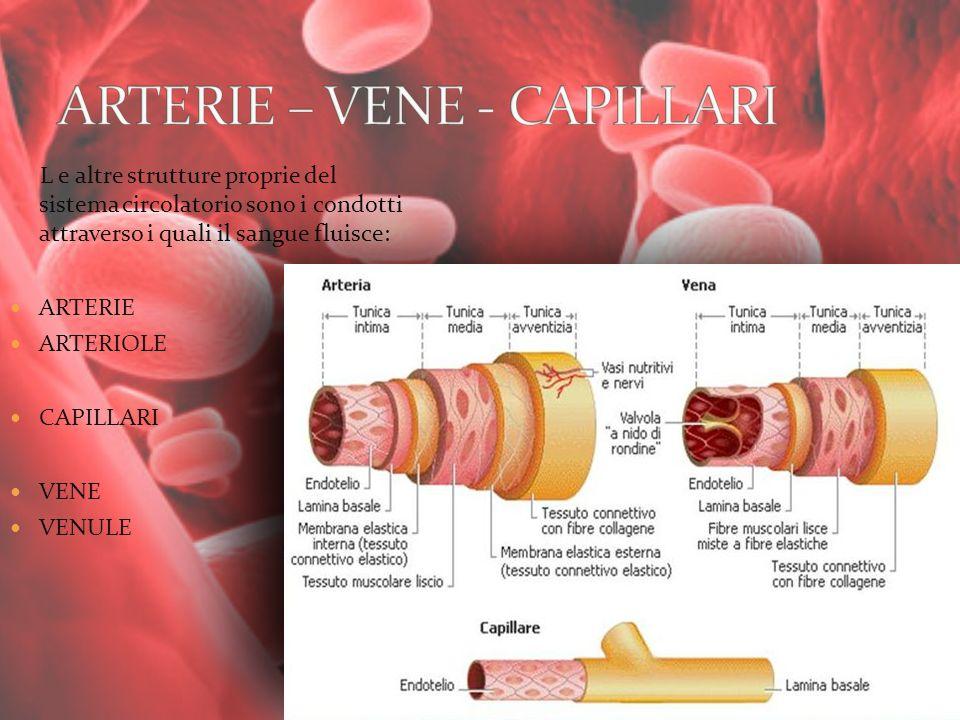 L e altre strutture proprie del sistema circolatorio sono i condotti attraverso i quali il sangue fluisce: ARTERIE ARTERIOLE CAPILLARI VENE VENULE