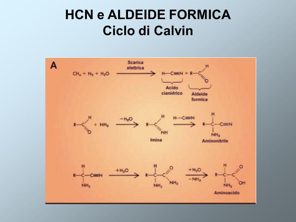 HCN e ALDEIDE FORMICA Ciclo di Calvin