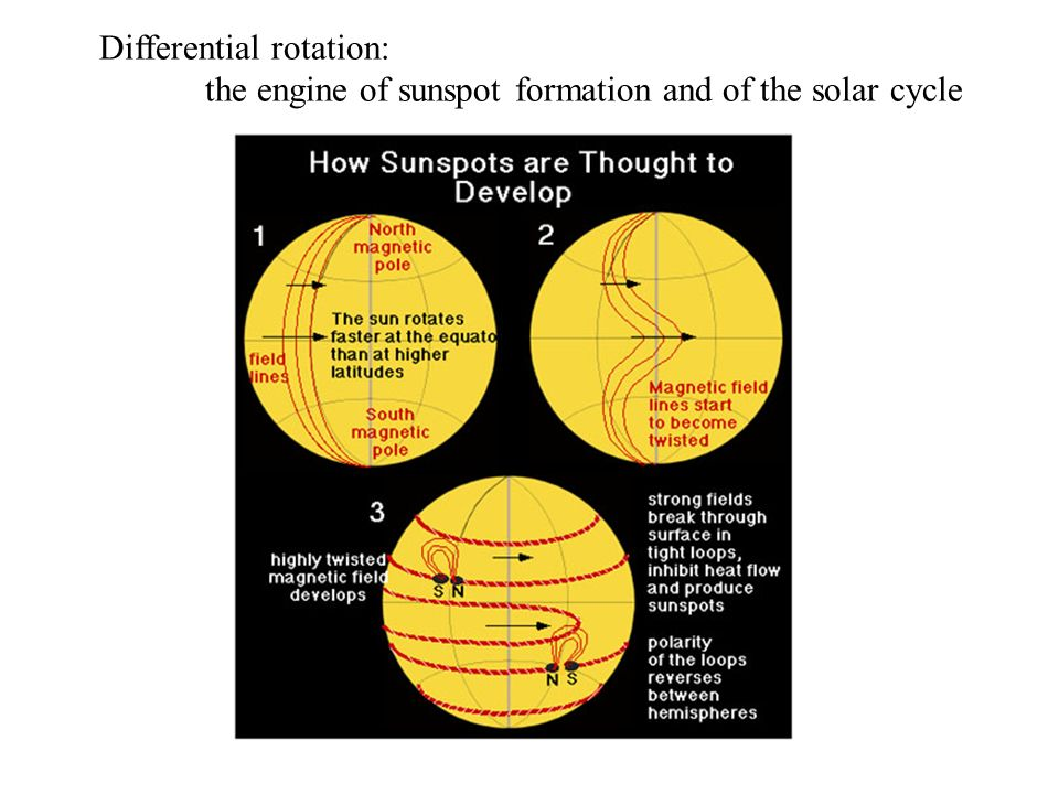 Differential rotation: the engine of sunspot formation and of the solar cycle