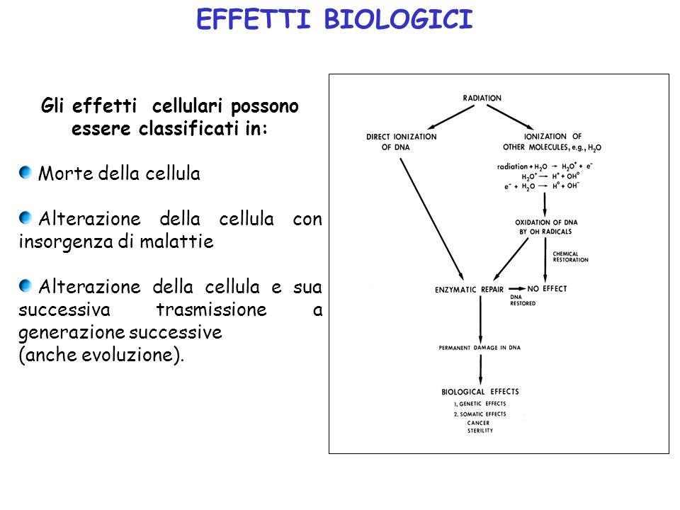 Gli effetti cellulari possono essere classificati in: Morte della cellula Alterazione della cellula con insorgenza di malattie Alterazione della cellu