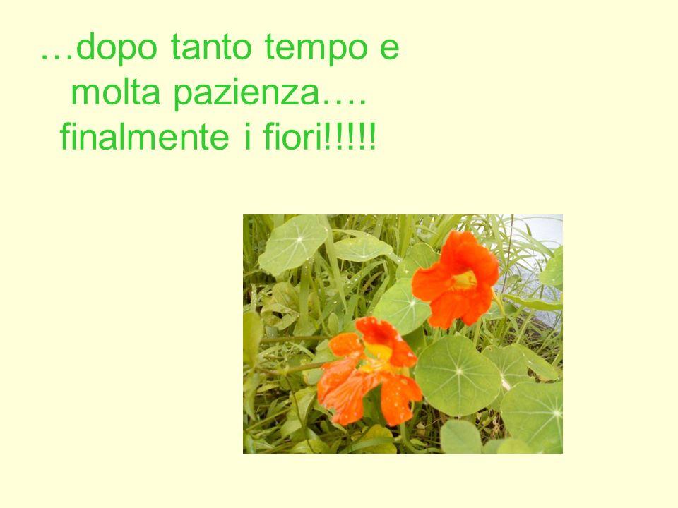 …dopo tanto tempo e molta pazienza…. finalmente i fiori!!!!!