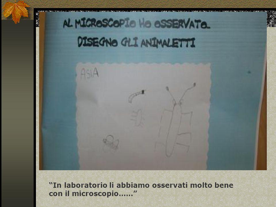In laboratorio li abbiamo osservati molto bene con il microscopio……