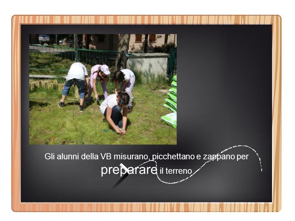 Gli alunni della VB misurano, picchettano e zappano per preparare il terreno