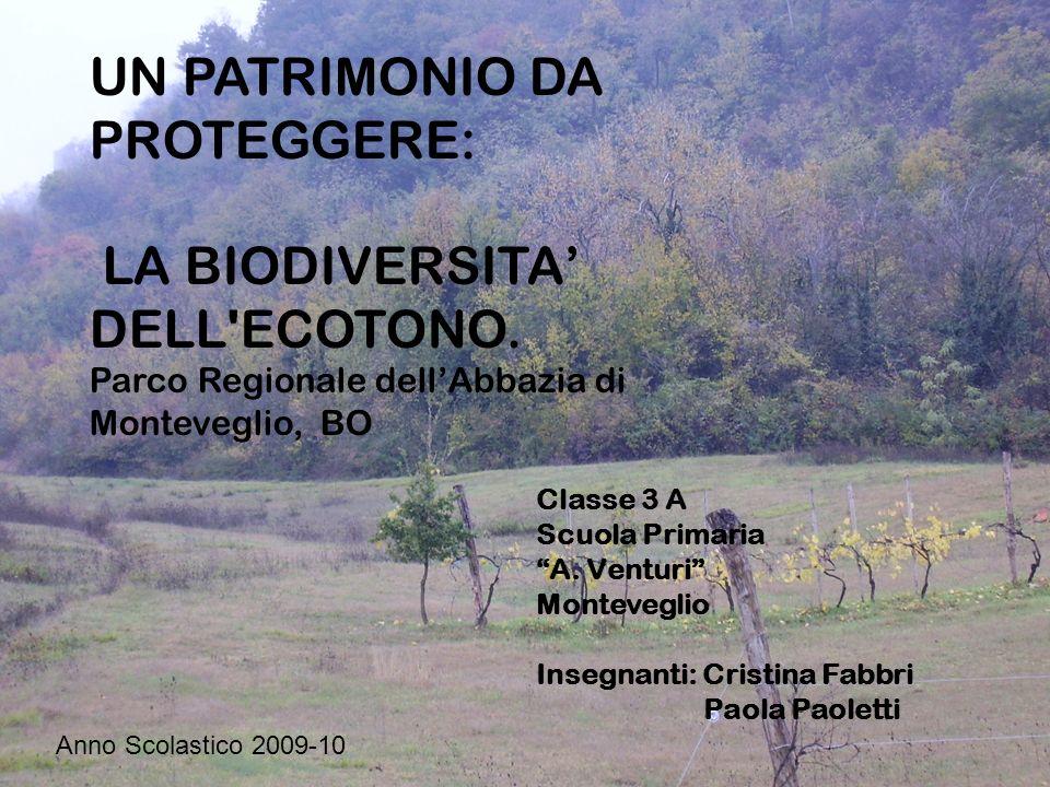 Classe 3 A Scuola Primaria A. Venturi Monteveglio Insegnanti: Cristina Fabbri Paola Paoletti UN PATRIMONIO DA PROTEGGERE: LA BIODIVERSITA DELL'ECOTONO
