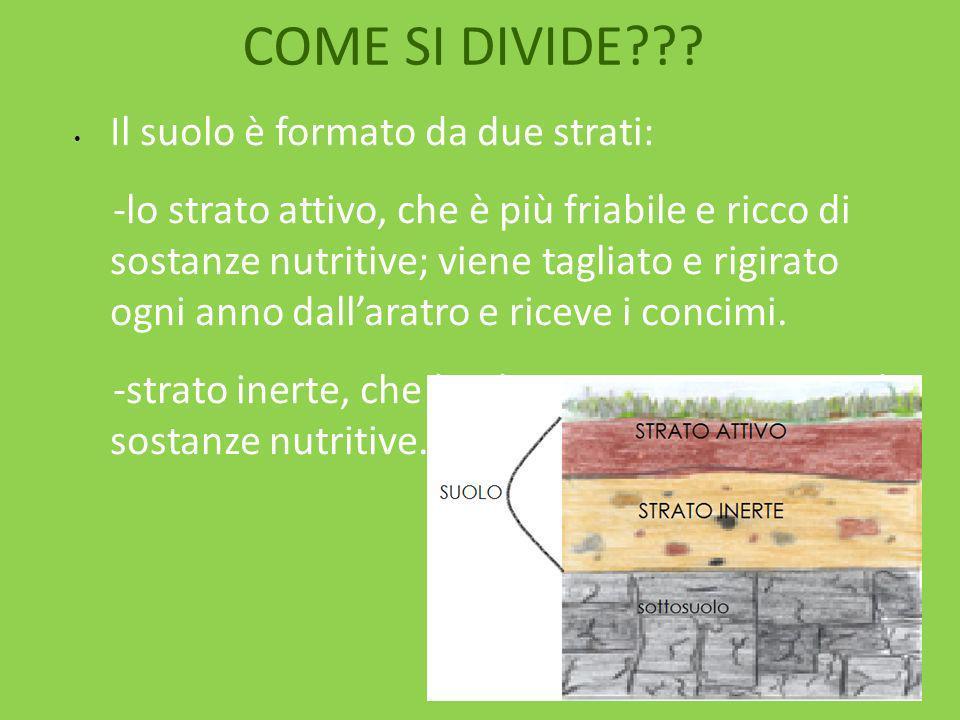 COME SI DIVIDE??? Il suolo è formato da due strati: -lo strato attivo, che è più friabile e ricco di sostanze nutritive; viene tagliato e rigirato ogn