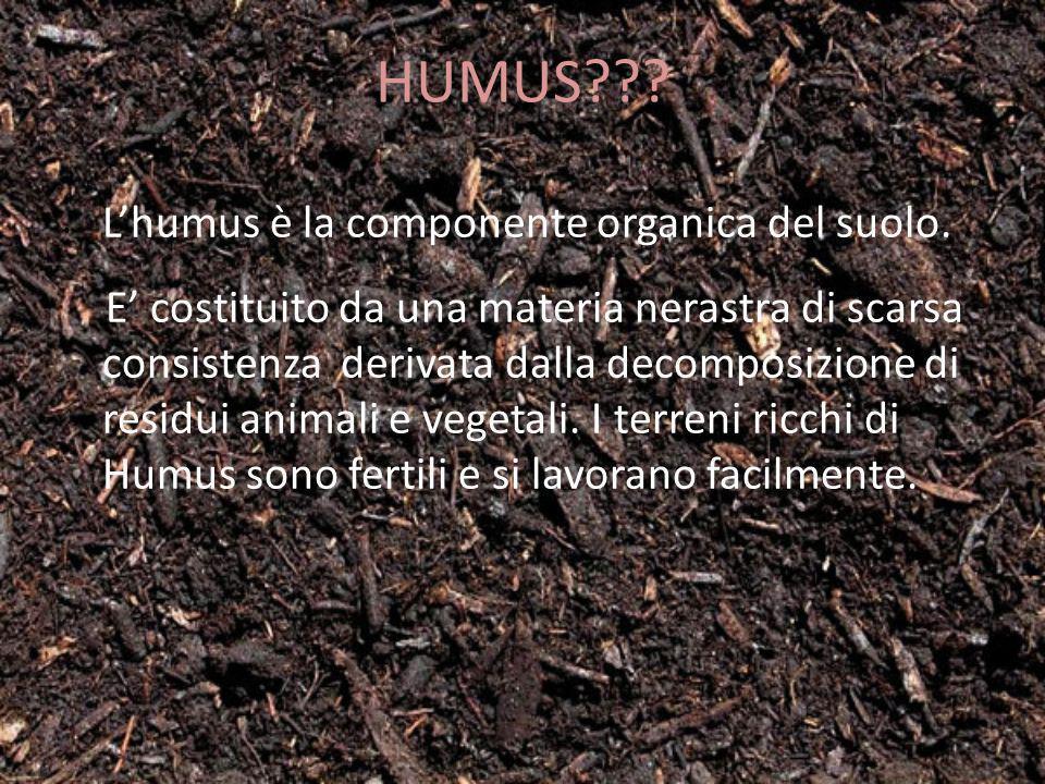 HUMUS??? Lhumus è la componente organica del suolo. E costituito da una materia nerastra di scarsa consistenza derivata dalla decomposizione di residu