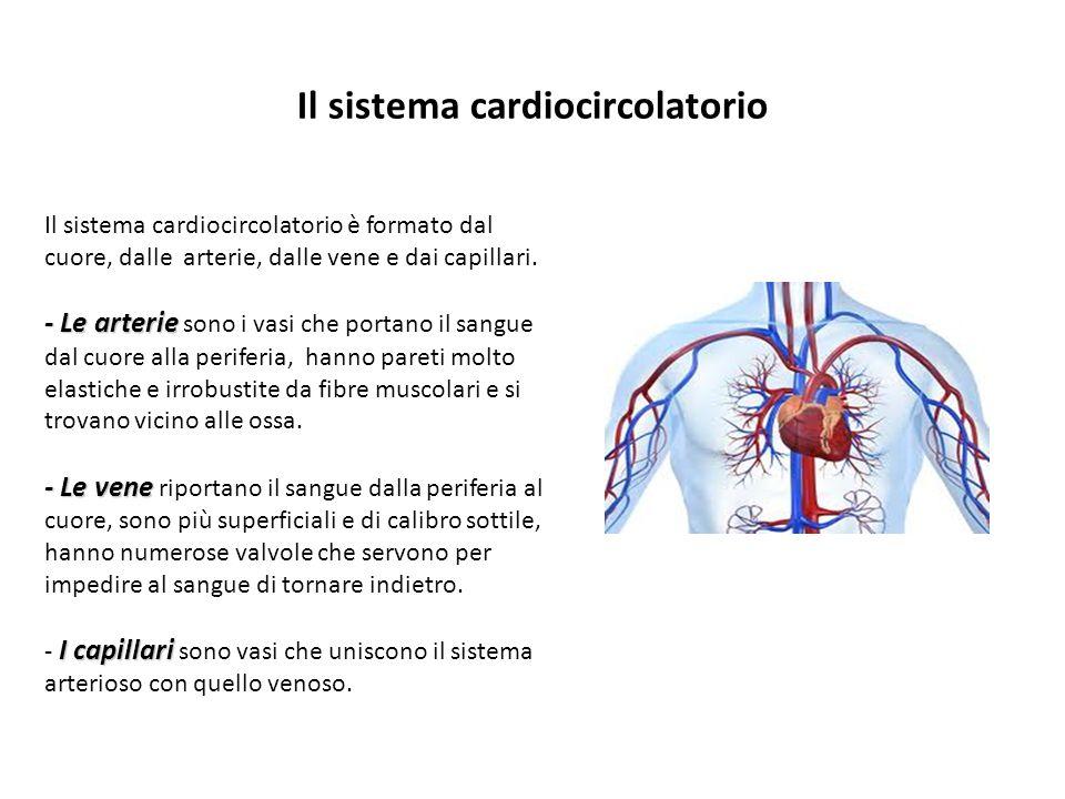 Il sistema cardiocircolatorio Il sistema cardiocircolatorio è formato dal cuore, dalle arterie, dalle vene e dai capillari. - Le arterie - Le arterie