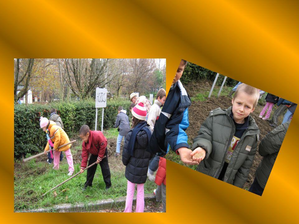 LA SEMINA IN GIARDINO Lentusiasmo e la curiosità hanno caratterizzato questattività; i bambini a turno hanno preparato il terreno, seguendo le indicaz